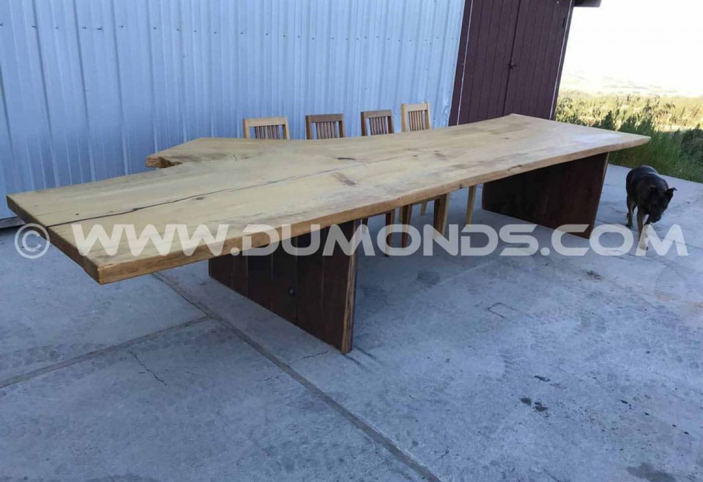 15.5′ GINKO LIVE EDGE DINING TABLE WITH WALNUT LEGS